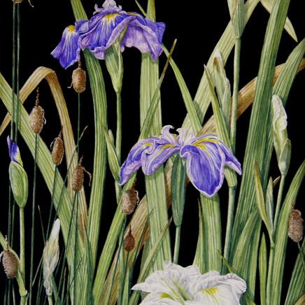 Moya Davern - Mixed Iris Japonica