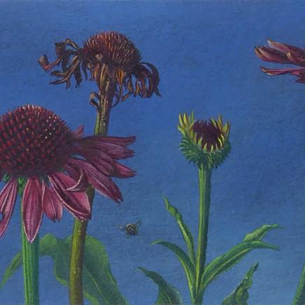 Kim Dewsbury - Echinacea Life