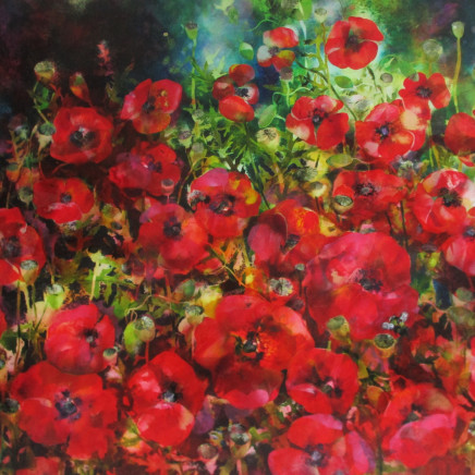 Ann Bridges - Summer Poppies