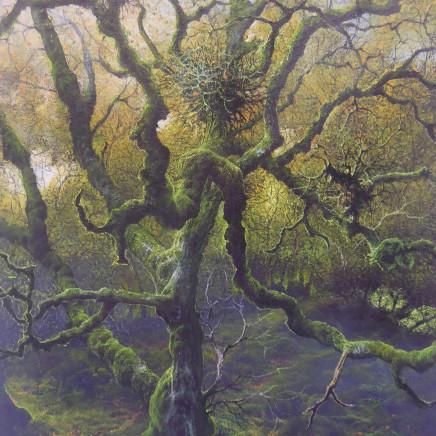 Gerald Dewsbury - Big Old Birch, Coed y Rhygen
