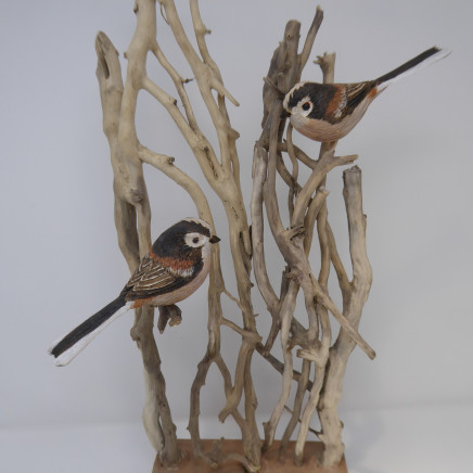 John & Marilyn Davies - Long-tailed Tits
