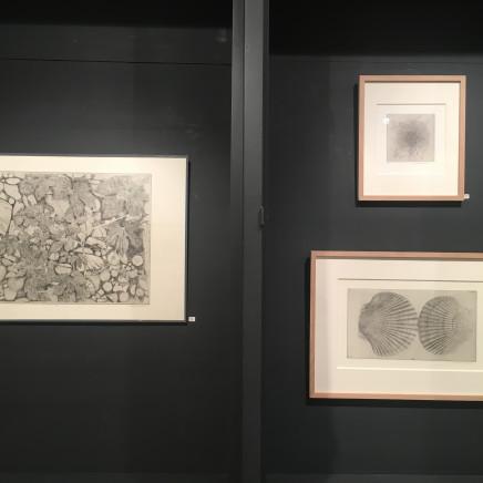 """""""Bois et houblon II"""", 2010 - """"Deux coquillages"""", 2015 et """"Akène plumeux du salsifis sauvage II"""", 2005."""