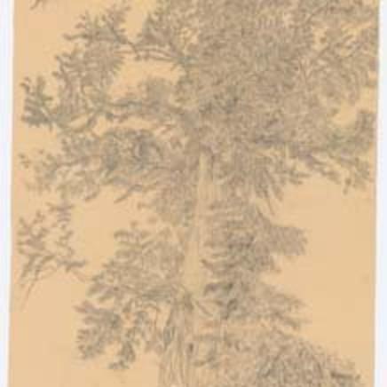 Gudrun von Maltzan - Baum, 2008