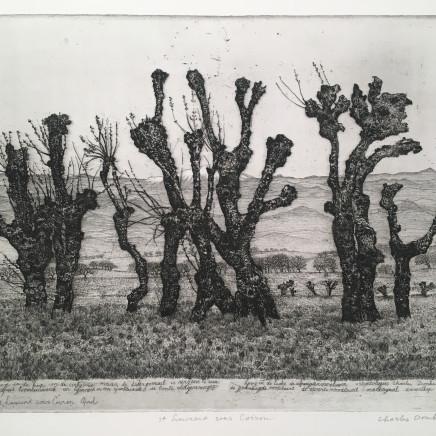 Charles Donker, Geknotte zwarte moerbeien in de Ardèche (Mûriers noirs écimés en Ardèche), Circa 1970