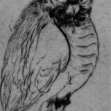 Marjan Seyedin, Oiseau 2, 2011
