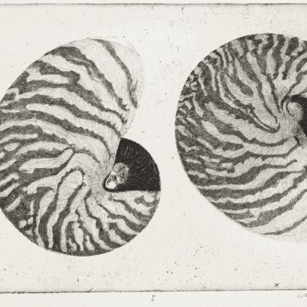 Charles Donker, Nautilus pompilius I, 2017