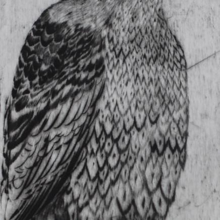 Marjan Seyedin, Oiseau 5, 2011