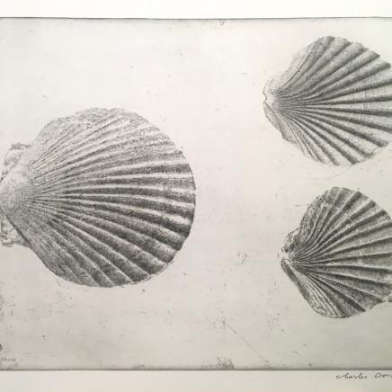 Charles Donker, Drie Schelpen (Trois coquillages), Circa 2015