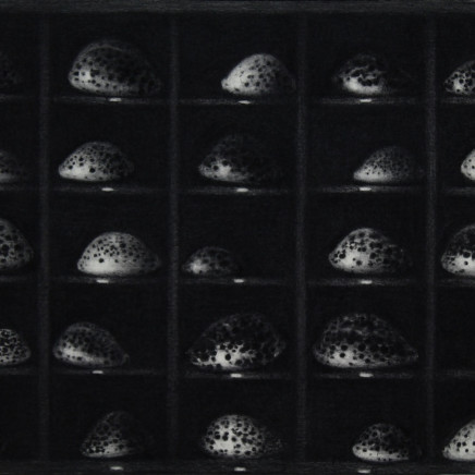 Nicolas Poignon, La collection de Tigris, 2018