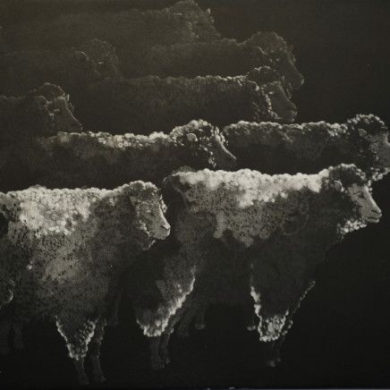 Marjan Seyedin, Troupeau de moutons, 2012