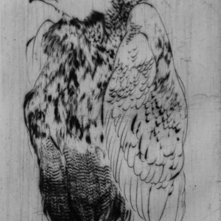 Marjan Seyedin, Oiseau 16, 2011