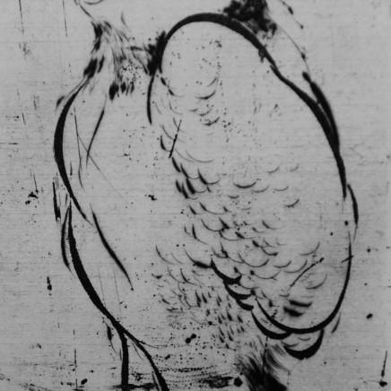 Marjan Seyedin, Oiseau 4, 2011