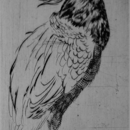 Marjan Seyedin, Oiseau 13, 2011