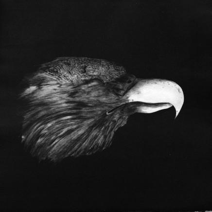 Marjan Seyedin, Tête d'aigle, 2006