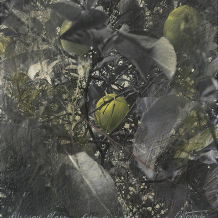 Citronnier, 2011, aquarelle, crayon et pastel sur photo