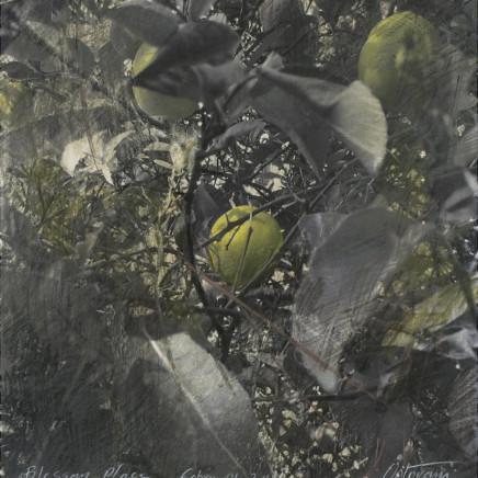 Citronnier, 2011, aquarelle, crayon et pastel sur photo
