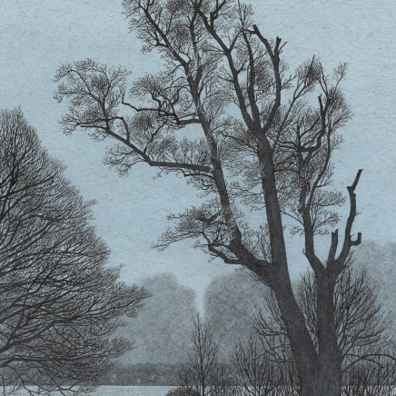 Simon Dorrell - An Alder on the Riverbank, Hughes' Field