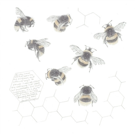Louisa Crispin - Study of a Bumble Bee