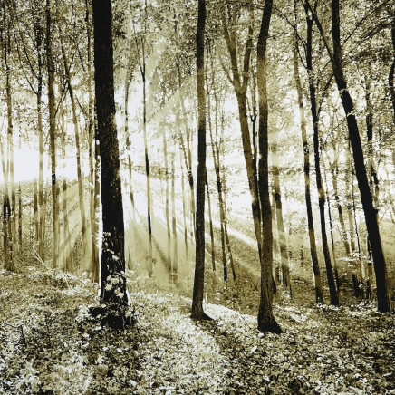 Mark S Payne - Woodland Light