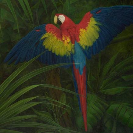 Elizabeth Butterworth - Palm Cockatoo
