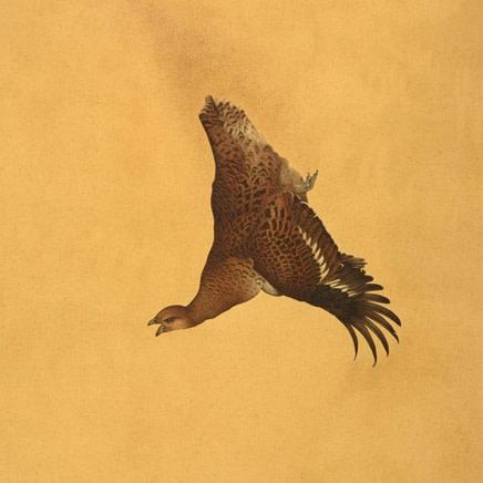 Steven Porwol - Exotic Pheasants
