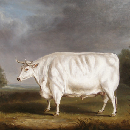 William Henry Davis - Chillingham bull in a field