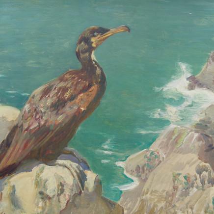 Charles Walter Simpson - Green Cormorant
