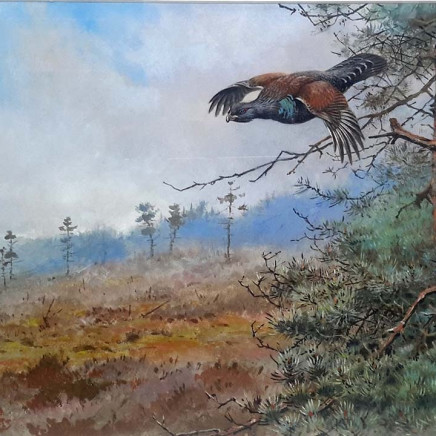 George Edward Lodge - Capercaillie in Flight