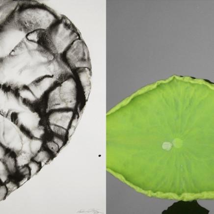 Barbara Edelstein 芭芭拉・愛德斯坦 - Ginkgo Leaf # 1, 2013