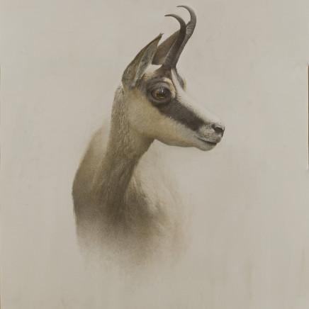 Marzio Tamer - Orice - Antelope