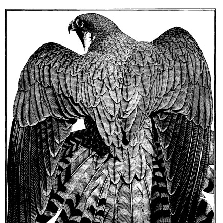 Colin See-Paynton - Peregrine Mantle