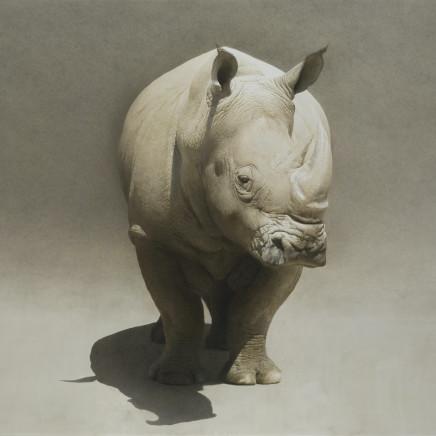 Marzio Tamer - Rhino