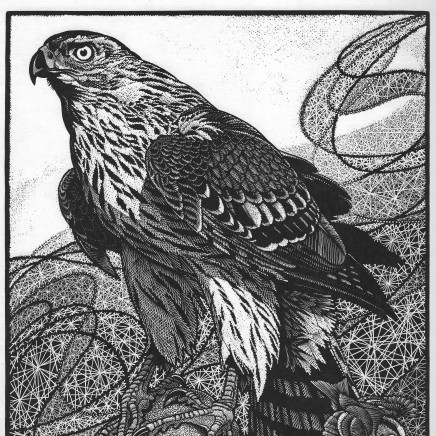 Colin See-Paynton - Goshawk and Goldcrest