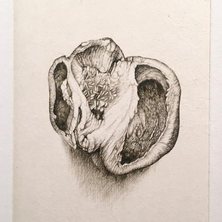 Anatomies végétales - Gravure #11, 2006-2007