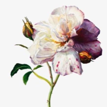 Rosie Sanders - Californian Tree Poppy