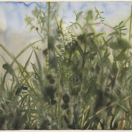 Rory McEwen - Wildflowers