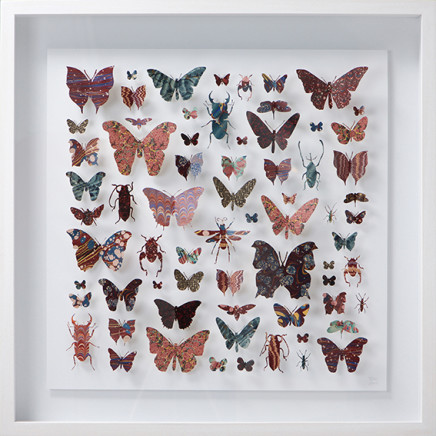 Helen Ward - Lepidoptera 4, 2016