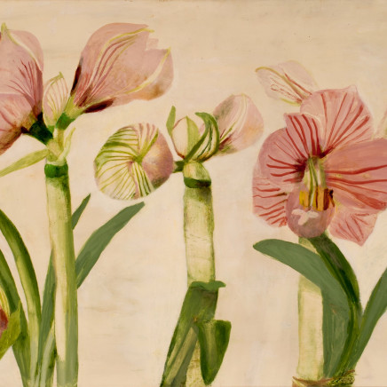 Mary Newcomb - Studies of an Amaryllis Flowering, 1987