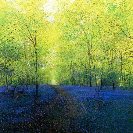 Springtime woodland