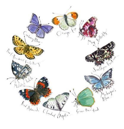 Butteflies 1