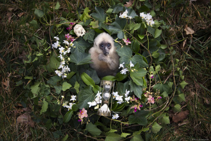 Anne de Carbuccia, Baby Gibbon