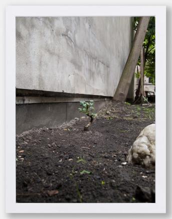 Alice Wang 王凝慧, Untitled 无题, 2013