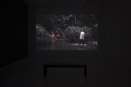 Chen Dandizi 陈丹笛子, Spring Flamingo 春日火烈鸟, 2016