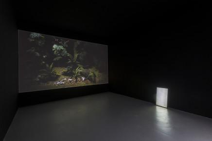 Wang Haiyang 王海洋, Ravage 蹂躏, 2017