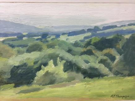 Alan James Thompson, Bushes in Sunlight