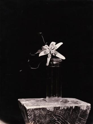 Constantin Brancusi, Lily, 1933
