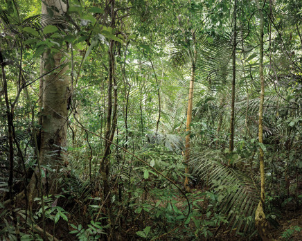 Olaf Otto Becker, PRIMARY FOREST 13, MALAYSIA, 2013