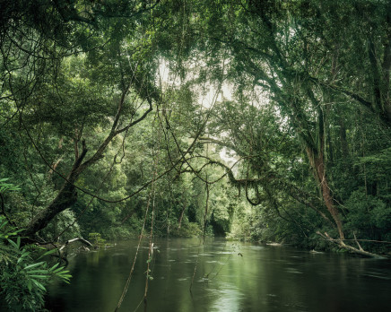 Olaf Otto Becker, PRIMARY FOREST 01, WATERWAY, MALAYSIA, 2013