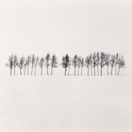 Michael Kenna, Twenty Four Trees, Abashiri, Hokkaido, Japan, 2005