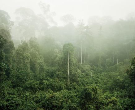 Olaf Otto Becker, PRIMARY FOREST 03, BORNEO, MALAYSIA, 2012
